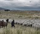 Patagonia036
